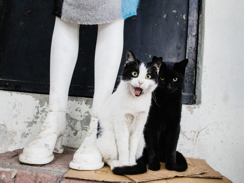 Отличная новость для любителей кошек и путешествий!