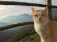 Путешествие на четырех лапах. Аккаунты кошек-туристов.